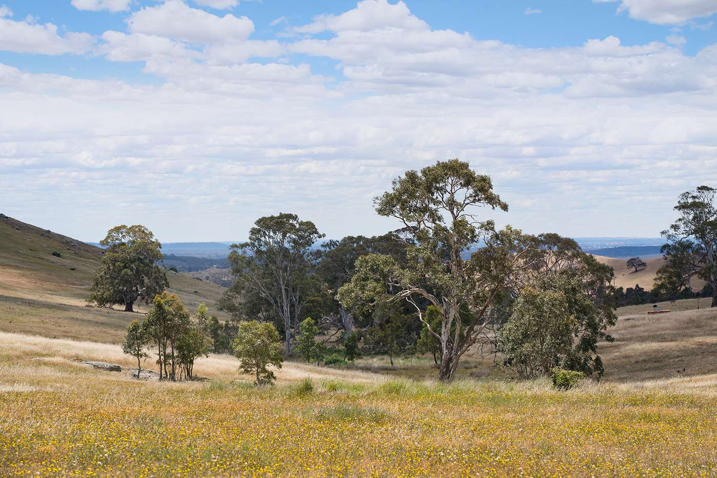 Seventh view of Homely residentialLand listing, Lot 10 Youngs Lane, Sedgwick VIC 3551