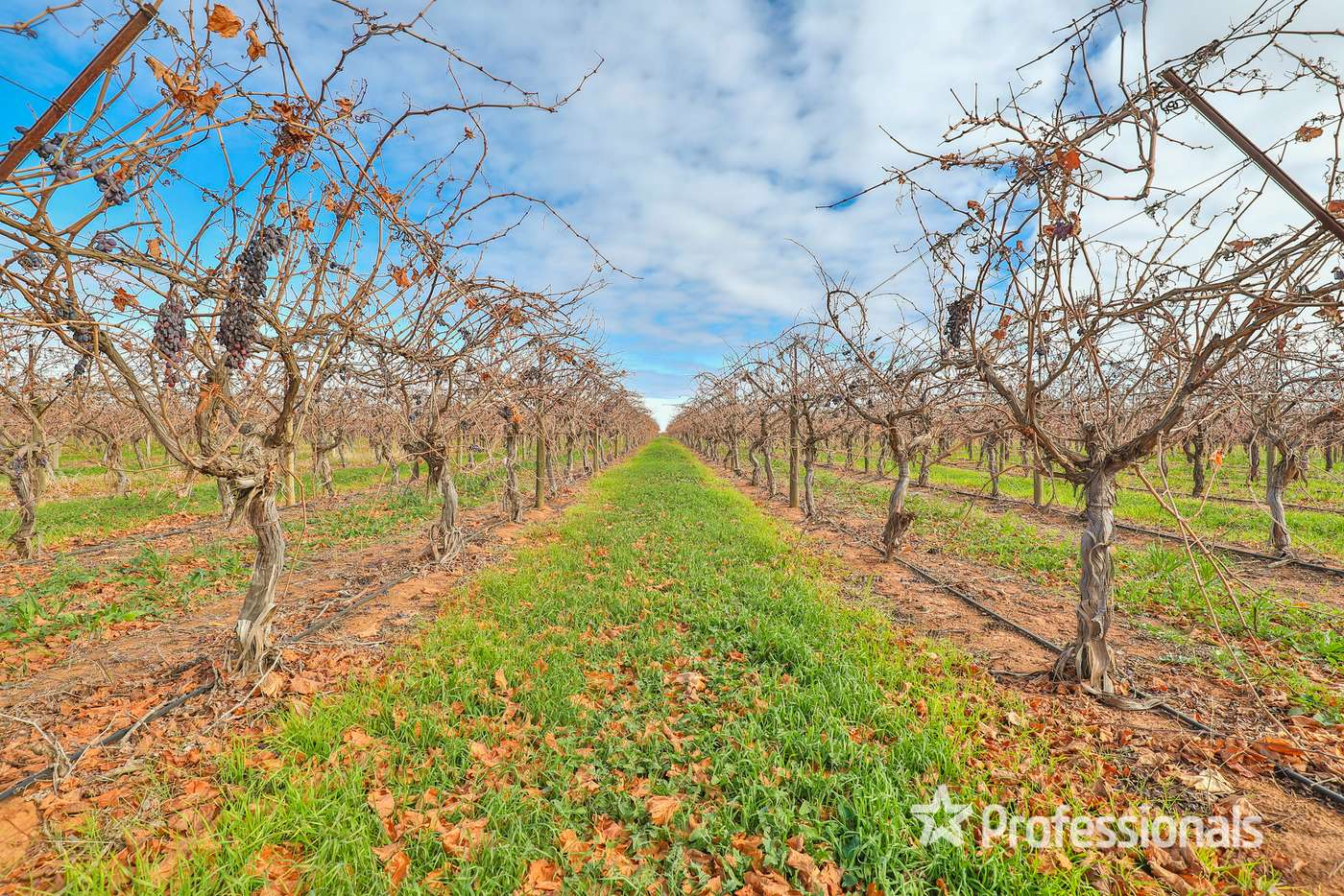 Fifth view of Homely viticulture listing, 248 Sunnycliffs Crescent, Sunnycliffs VIC 3496
