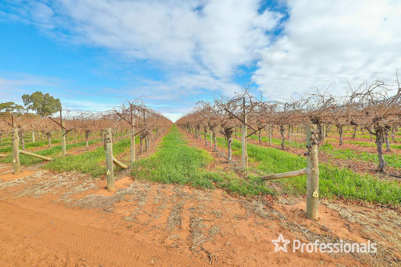 Sixth view of Homely viticulture listing, 248 Sunnycliffs Crescent, Sunnycliffs VIC 3496