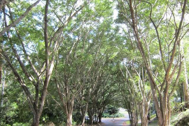 11 Turnipwood Drive, Buderim QLD 4556