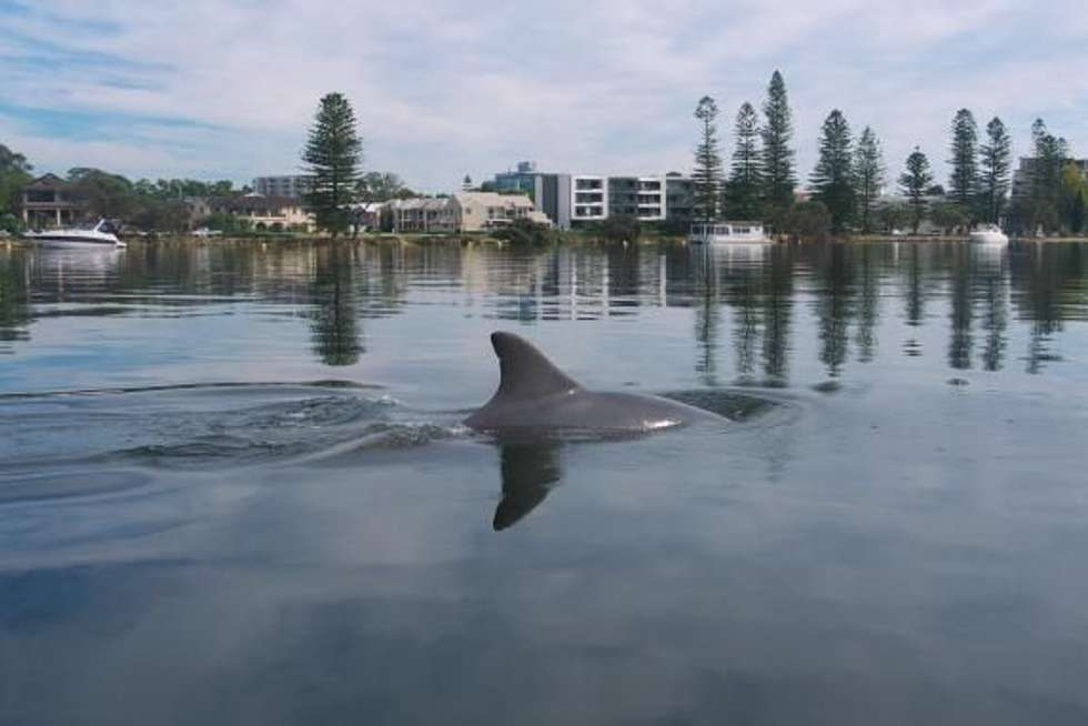 Third view of Homely house listing, 20 Edgar Way, Mount Pleasant WA 6153