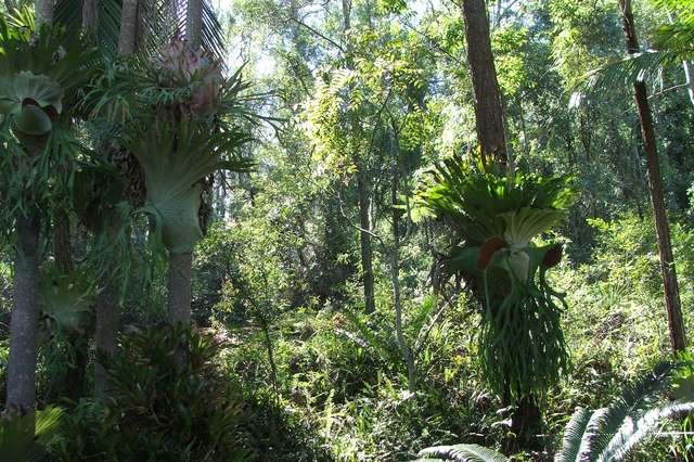124-126 Murrays Road, Tanah Merah QLD 4128