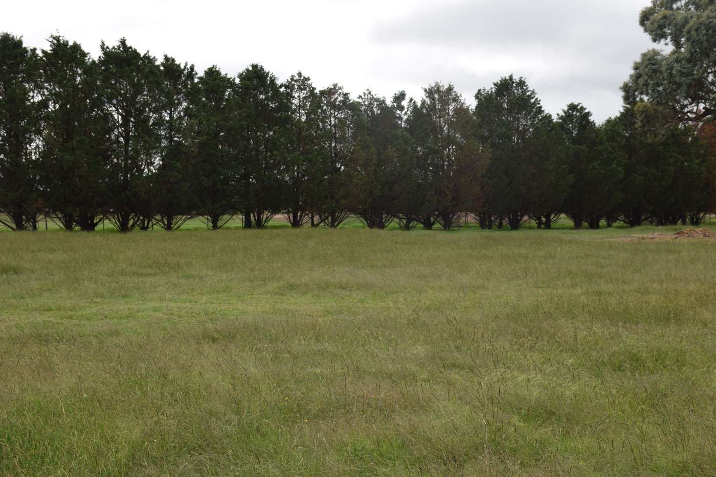 Sixth view of Homely acreageSemiRural listing, 3713 Thunderbolts Way, Uralla NSW 2358