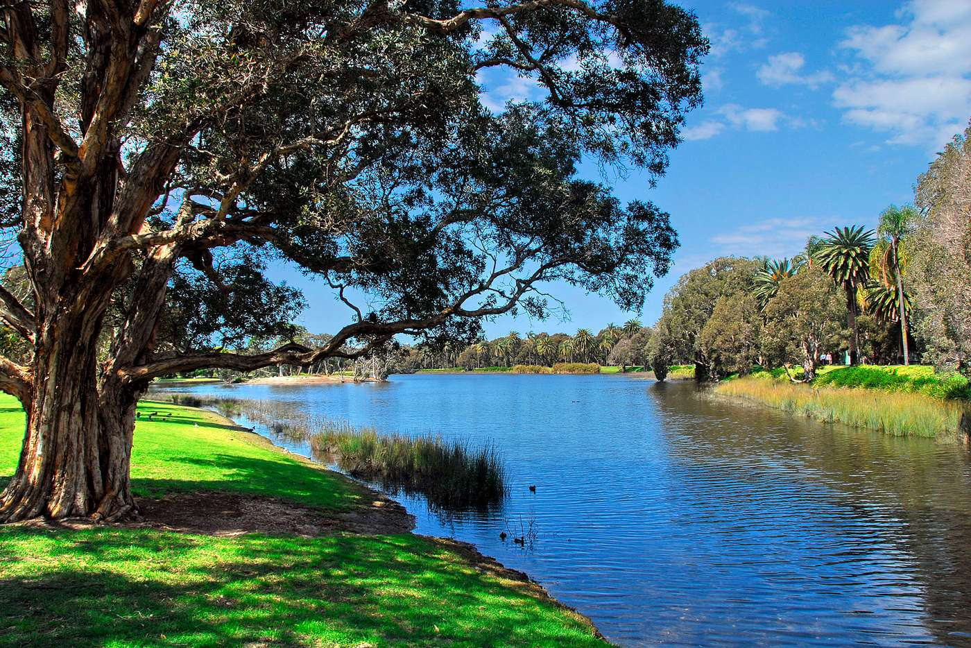 Sixth view of Homely apartment listing, 5/149-151 Cook Road, Centennial Park NSW 2021