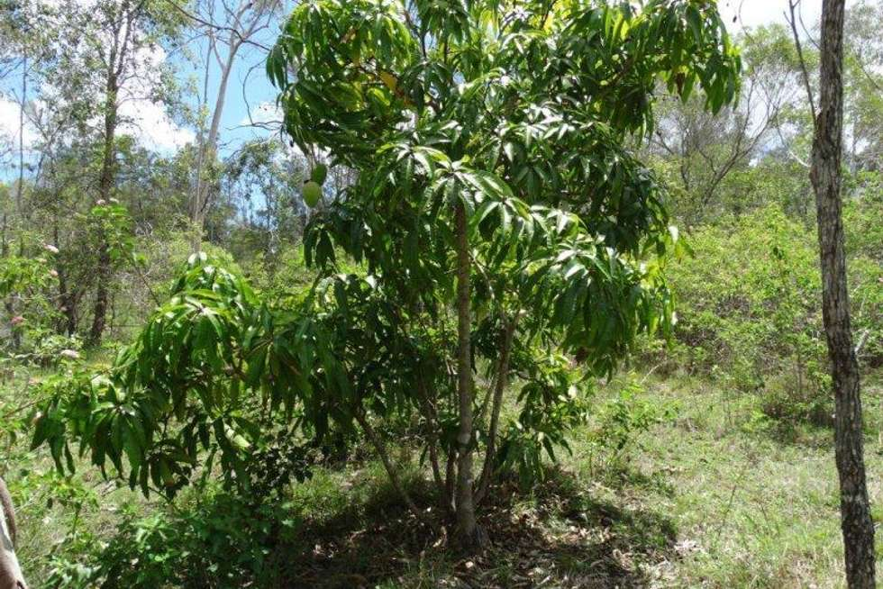 Second view of Homely ruralOther listing, 755 Hills Road, Mount Maria QLD 4674