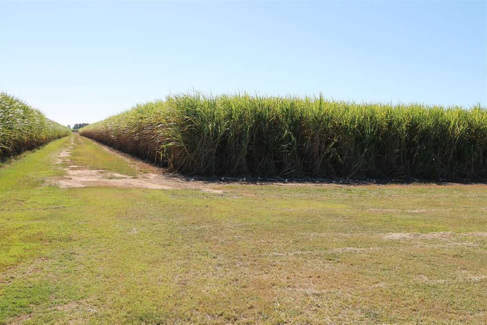 Fourth view of Homely ruralOther listing, 840 Rita Island Road, Jarvisfield, Ayr QLD 4807