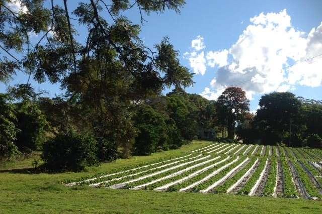 234 Old Palmwoods Road, Palmwoods QLD 4555