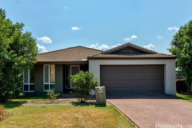 16 Cyperus Crescent, Carseldine QLD 4034