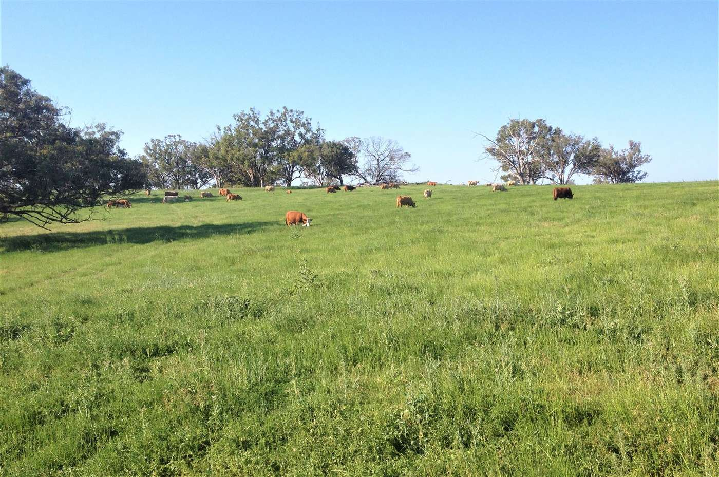 Cloven Hills', Neilrex Rd, Coolah, NSW 2843 Rural Propety - Homely
