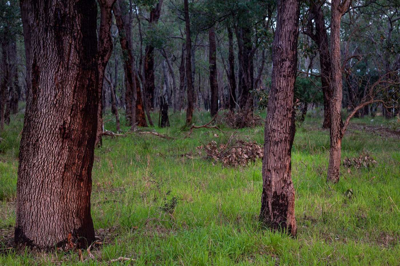 Seventh view of Homely residentialLand listing, Lot 6 Maine-Anjou Drive, Lower Chittering WA 6084
