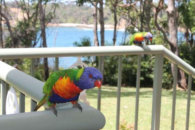 39 Pyang Avenue, Malua Bay NSW 2536