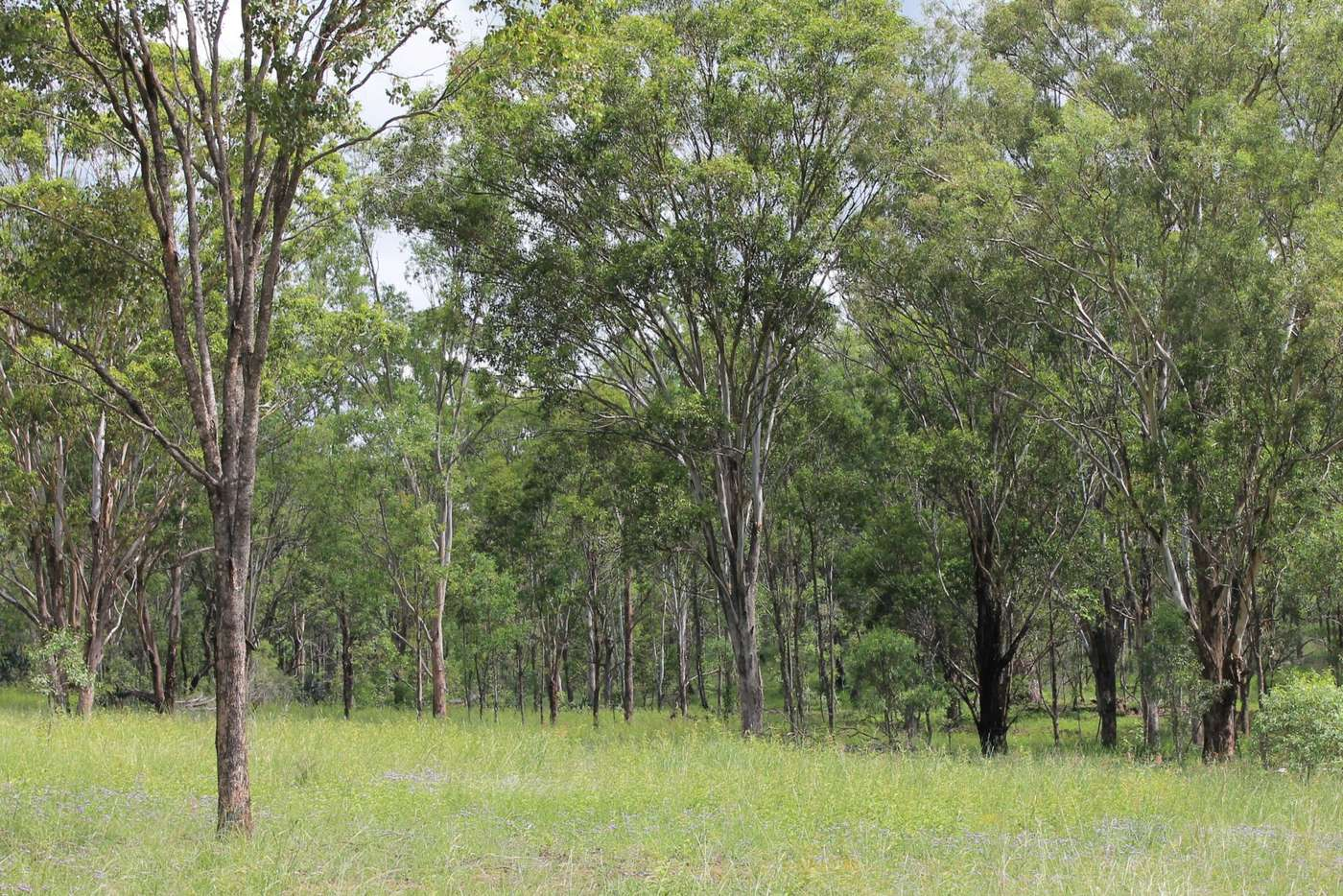 Main view of Homely residentialLand listing, Lot 1 Leyburn-Cunningham Road, Wheatvale QLD 4370