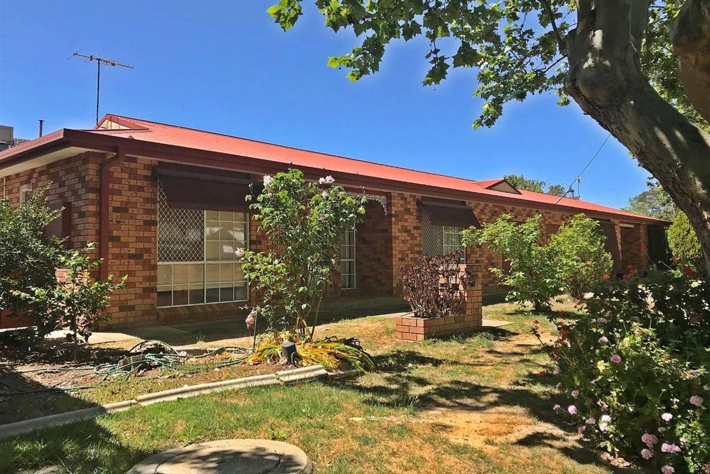 Main view of Homely unit listing, 1/5 McKinnon Street, Wagga Wagga NSW 2650