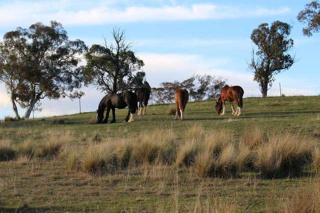 Proposed Lot 2/840 Marked Tree Road, Gundaroo NSW 2620
