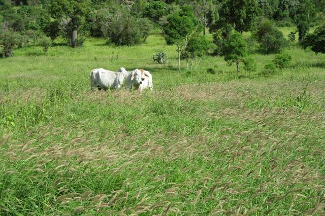 425 ACRES CATTLE GRAZING, Bell QLD 4408