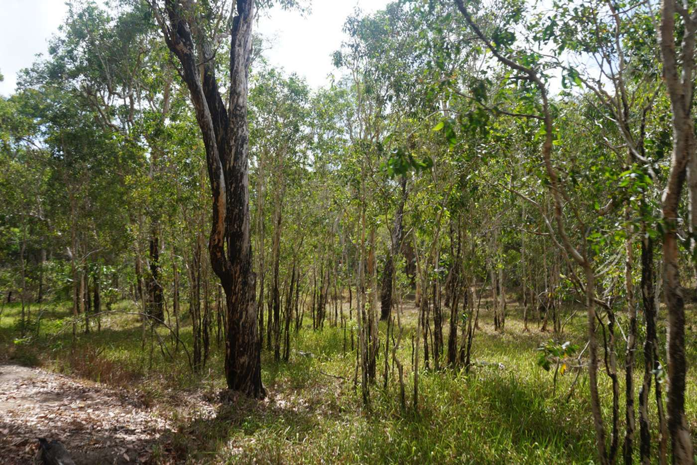 Sixth view of Homely acreageSemiRural listing, 349 AMOS ROAD, Coolbie QLD 4850