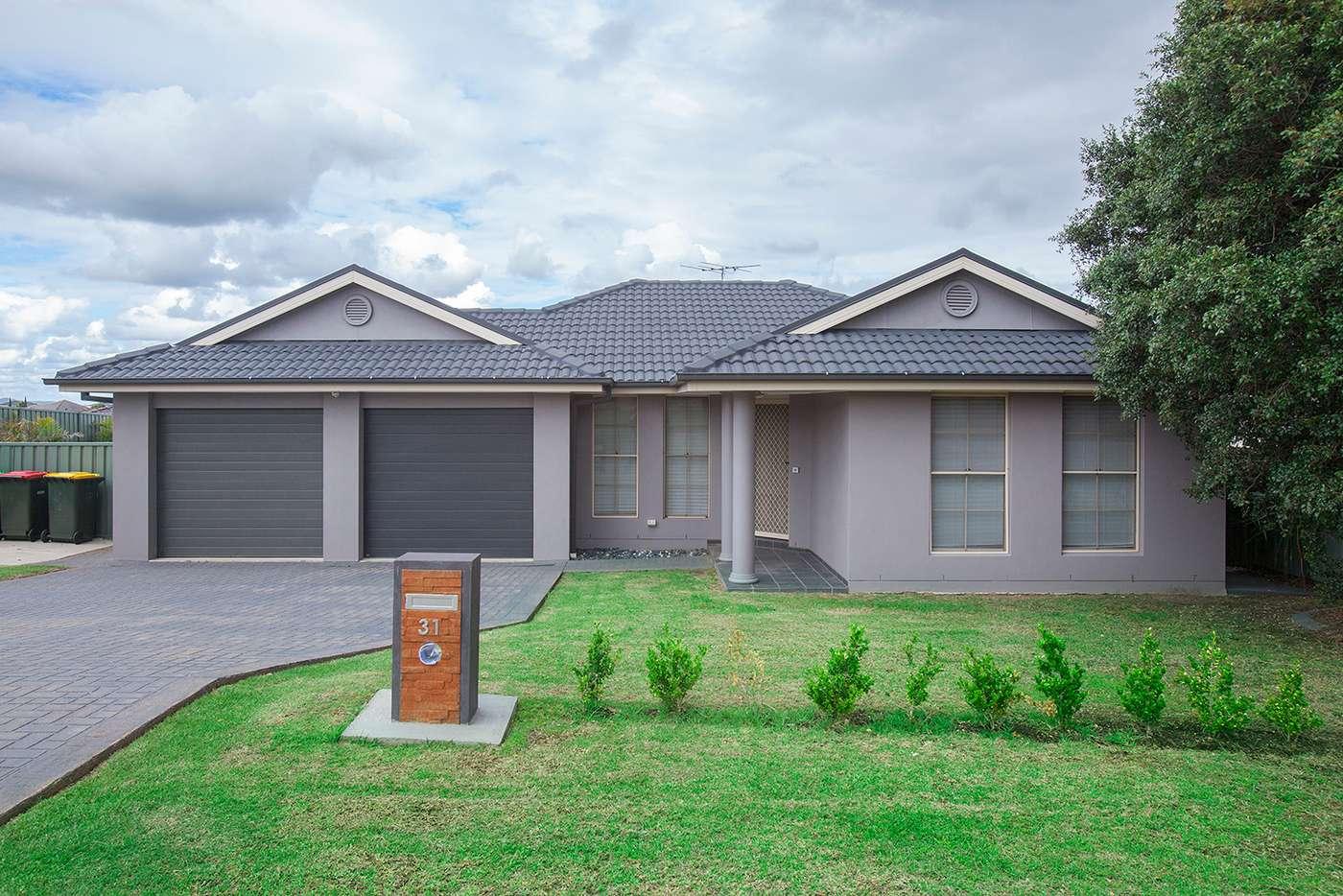 Main view of Homely house listing, 31 Lemonwood Circuit, Thornton NSW 2322