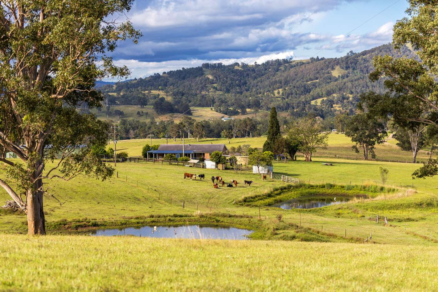 Main view of Homely lifestyle listing, 103 Butchers Creek Road, Wherrol Flat NSW 2429