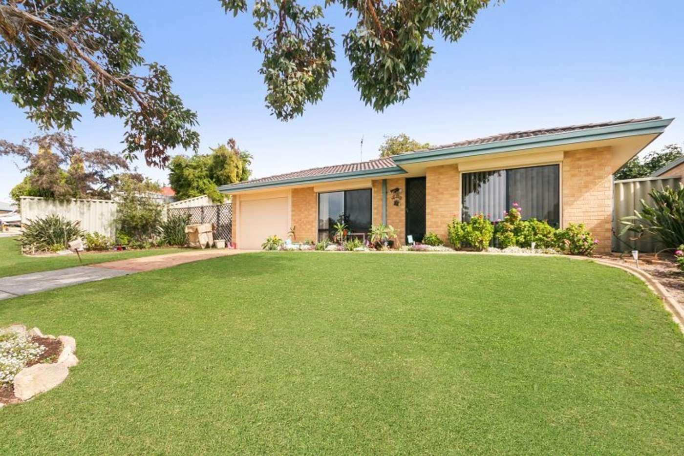 Main view of Homely house listing, 3 Ranunculus Court, Beeliar WA 6164