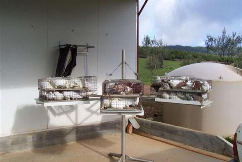 Third view of Homely ruralOther listing, - N/ A Tumbarumba Road Carabost Via, Wagga Wagga NSW 2650