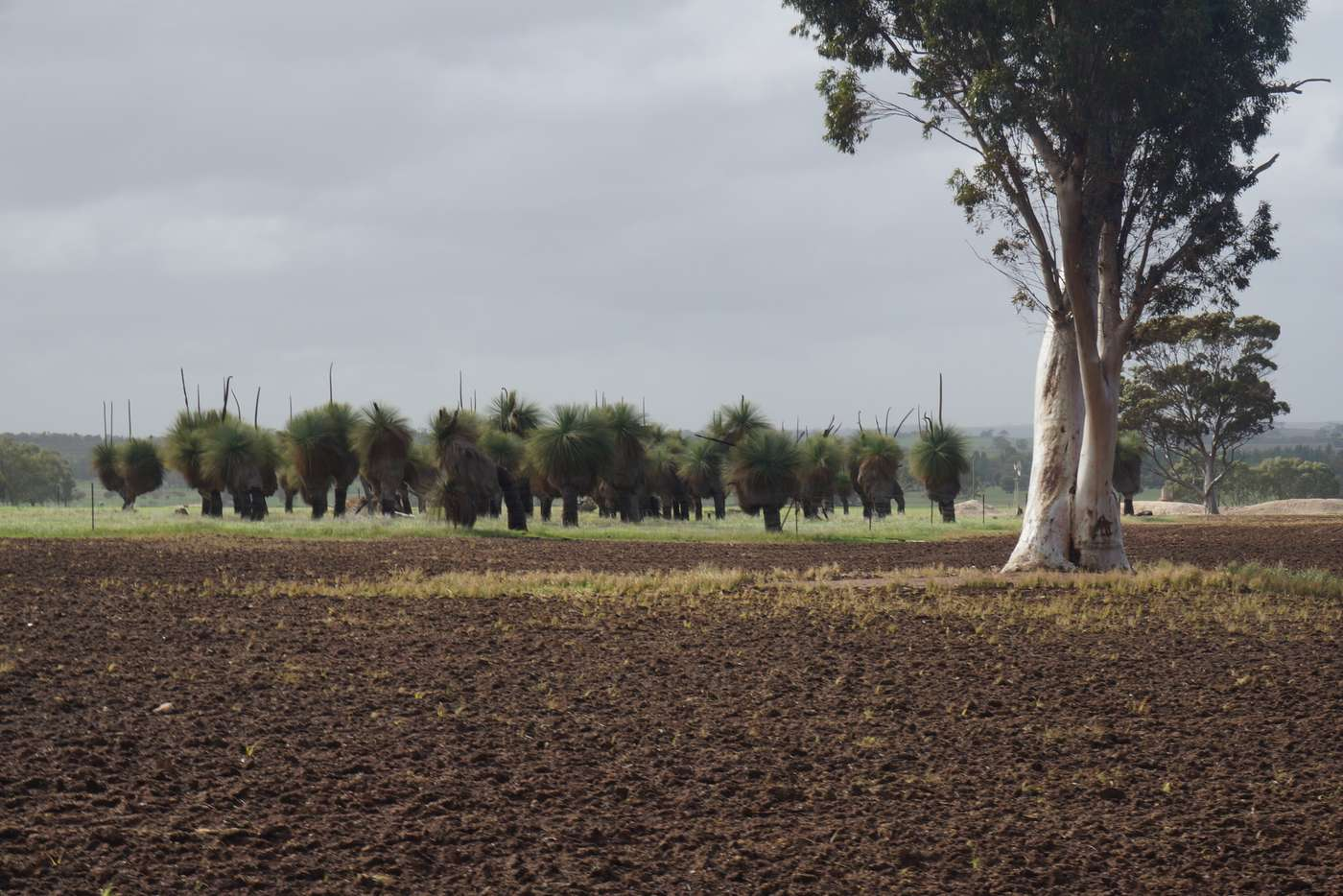Main view of Homely cropping listing, LOT 802 Westdale Road, Beverley WA 6304