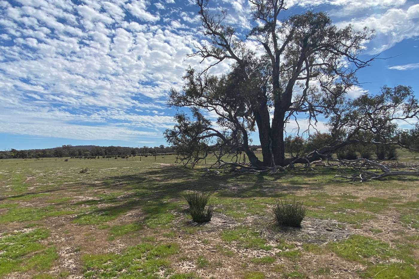 Seventh view of Homely lifestyle listing, LOT 702 Dale Kokeby Rd, Beverley WA 6304