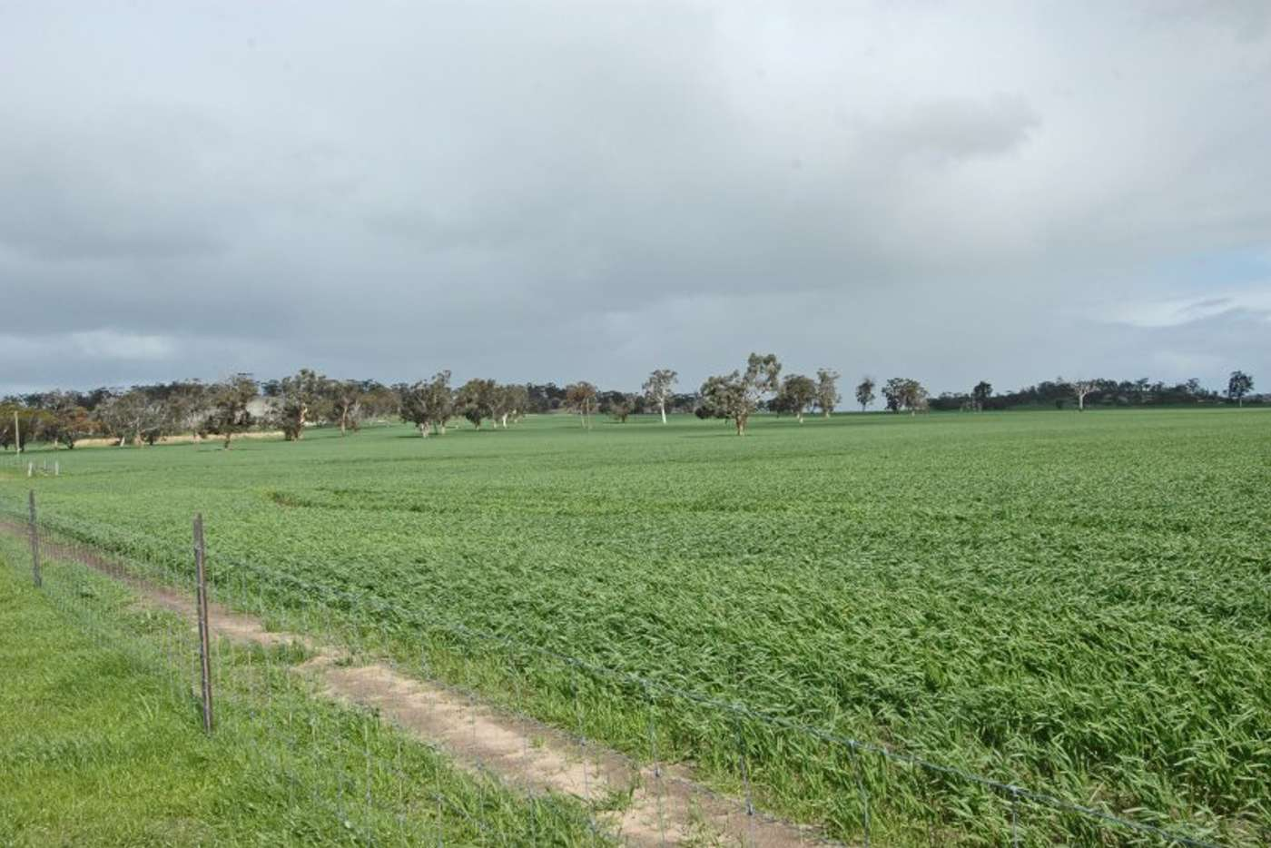 Main view of Homely mixedFarming listing, LOT 1 Kokeby West Road, Beverley WA 6304