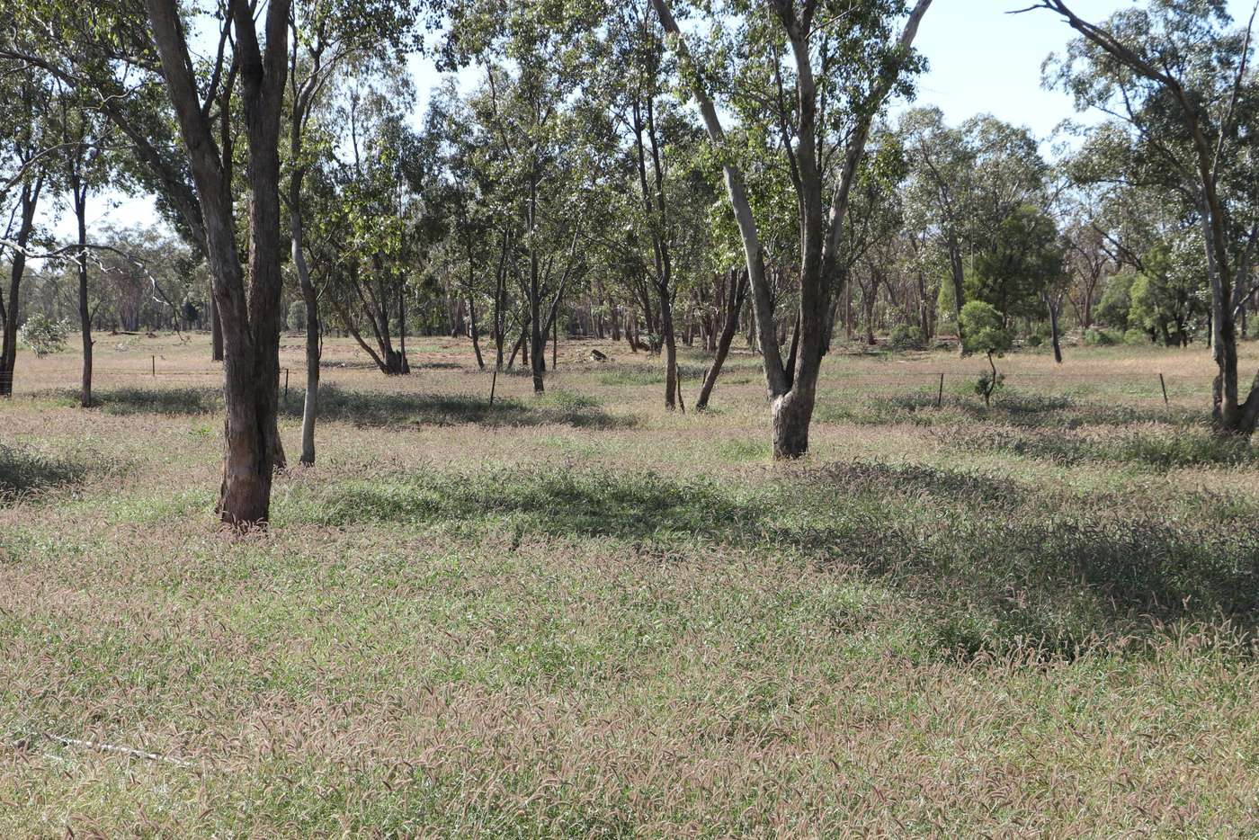 Main view of Homely ruralOther listing, 0 Tartulla, Mitchell QLD 4465