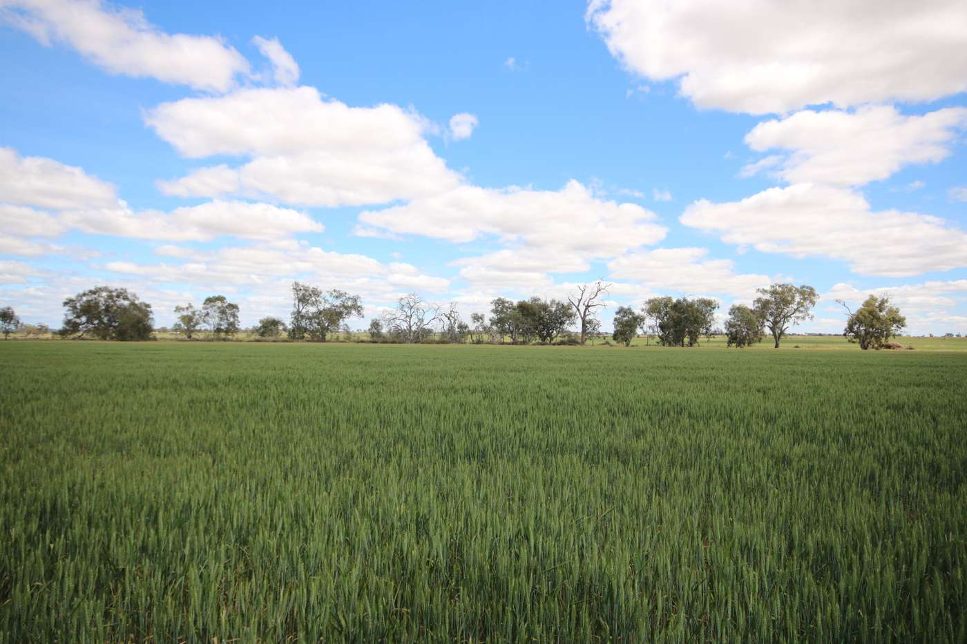 Main view of Homely  listing, _ Jeffreys Road, Corop, VIC 3559