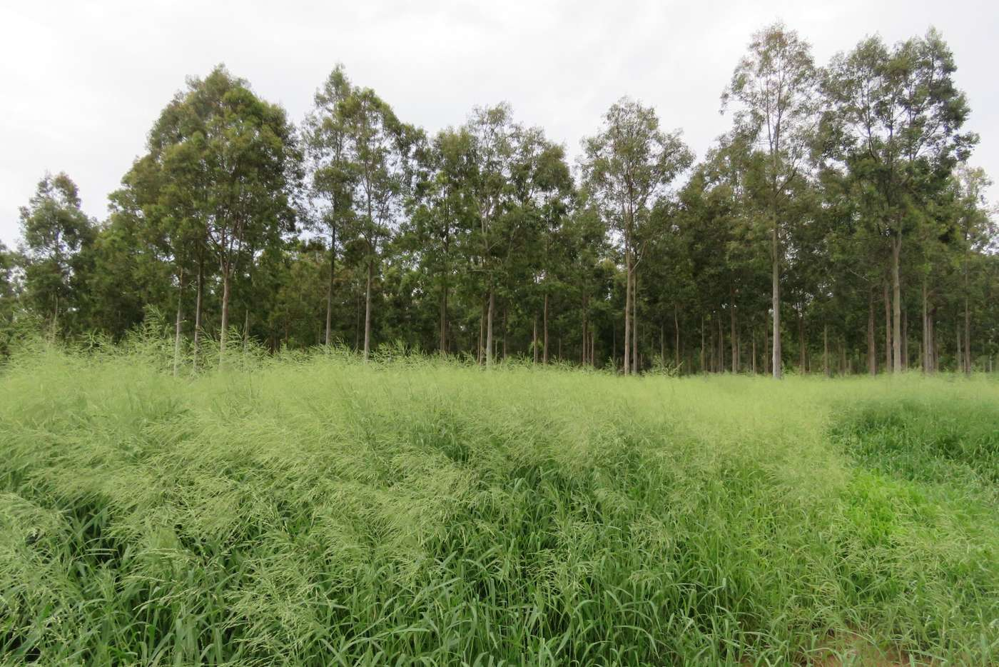 Main view of Homely ruralOther listing, Lot 23 & 24 Proston Boondooma Road, Brigooda, Proston QLD 4613