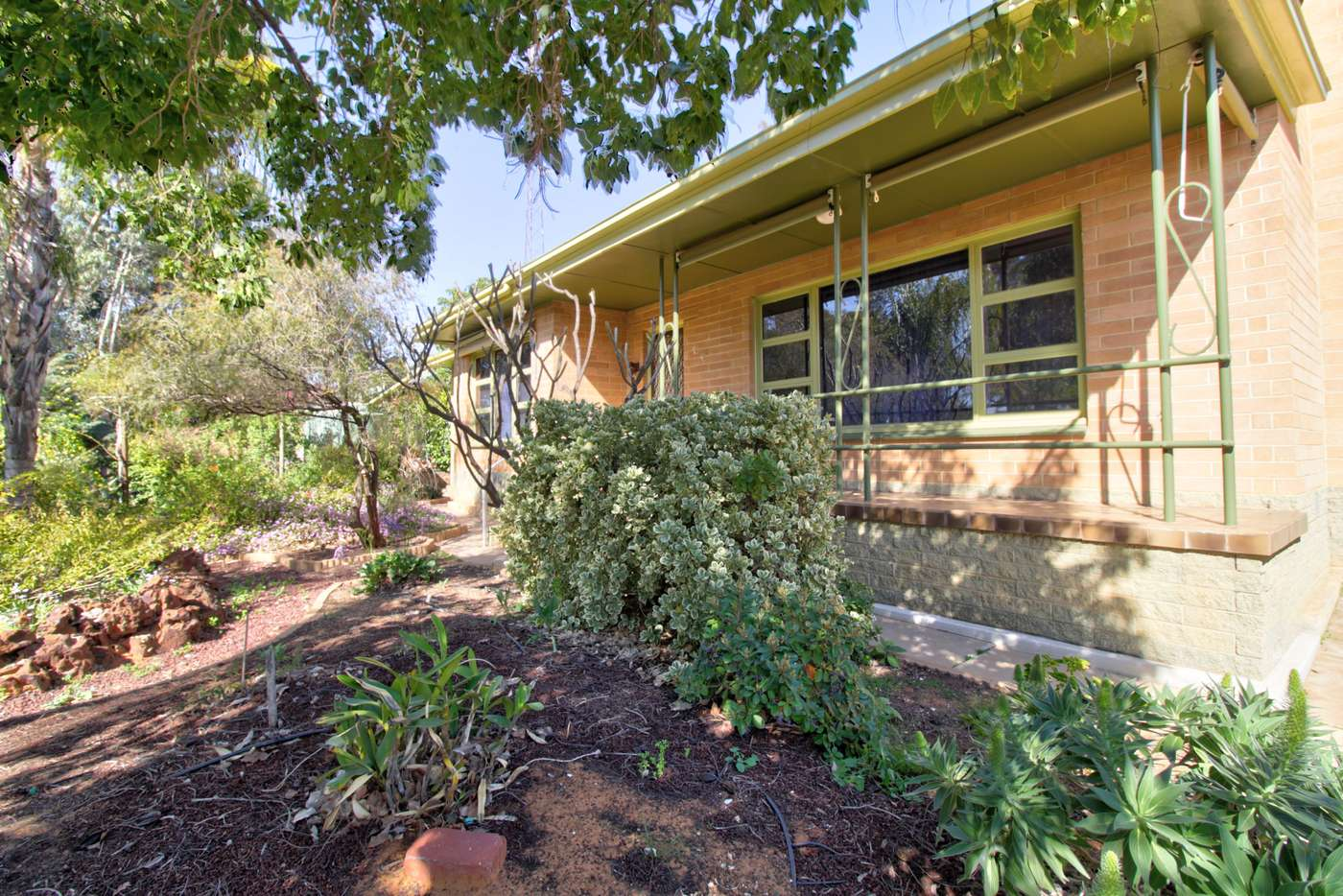 Main view of Homely house listing, 24 Nookamka Terrace, Barmera SA 5345