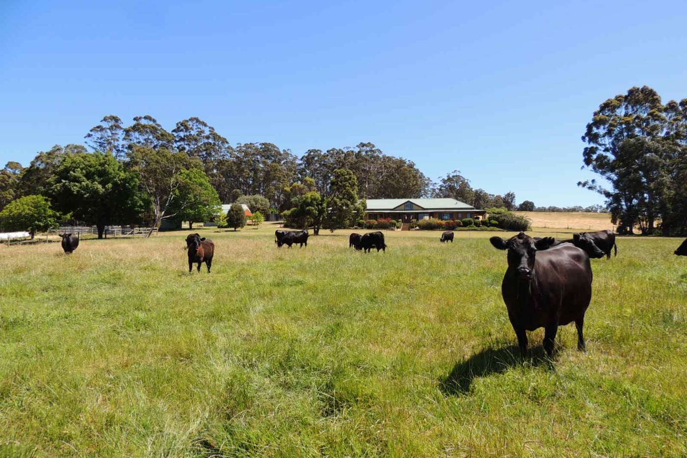 Main view of Homely ruralOther listing, Lot 1551 McIntyre Road, Denmark WA 6333