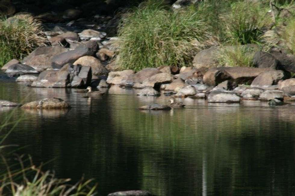 Third view of Homely ruralOther listing, 2952 Nerang Murwillumbah Road, Natural Bridge QLD 4211