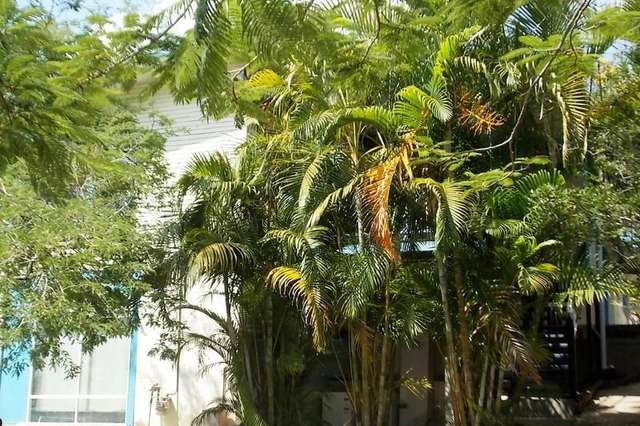 18 Camira Street, St Lucia QLD 4067