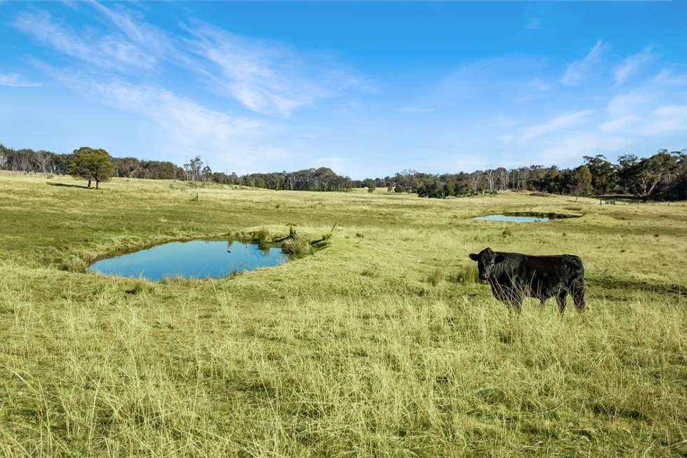 Second view of Homely livestock listing, 221 Gum Flat Road, Tenterfield NSW 2372