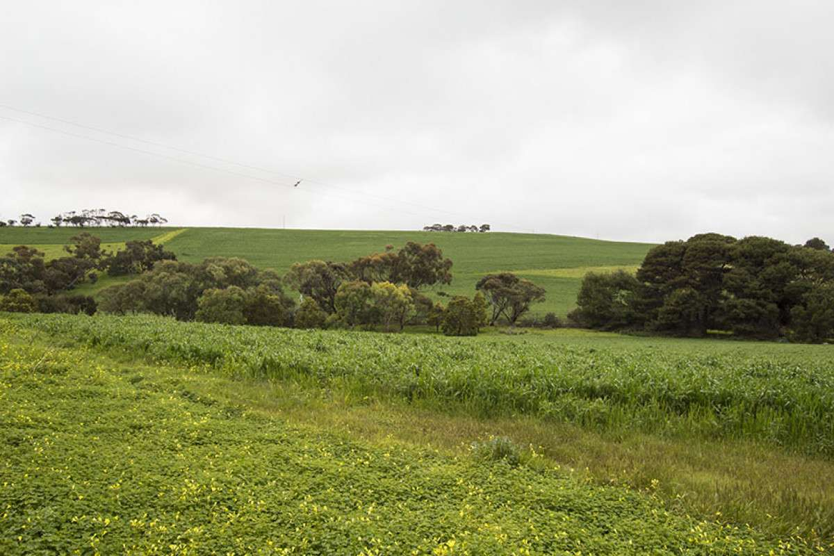Main view of Homely rural listing, 118 Thomas Road, Maslin Beach, SA 5170