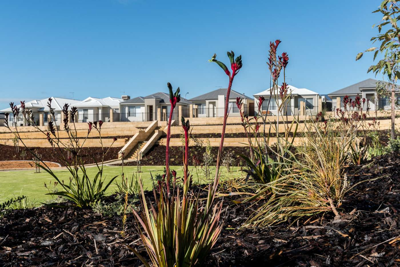 Seventh view of Homely residentialLand listing, LOT 525/17 Delphinium Way, Beeliar WA 6164