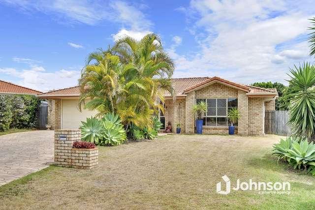 11 Orangegrove Court, Birkdale QLD 4159