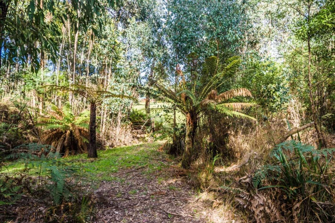 Main view of Homely residentialLand listing, 77 Falls Road, Marysville VIC 3779